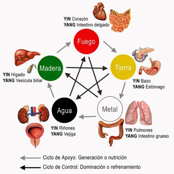 ciclo generacion