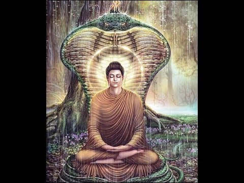 cobra buddha